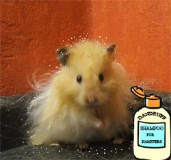 allergic reactions to hamsters